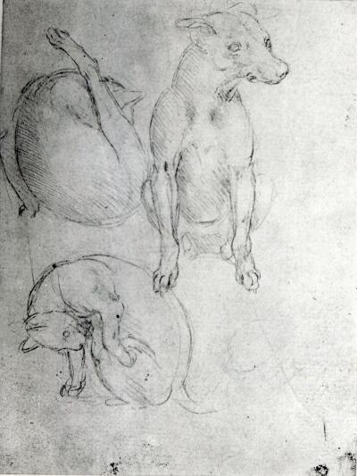 Study of a Dog and a Cat, c.1480-Leonardo da Vinci-Giclee Print