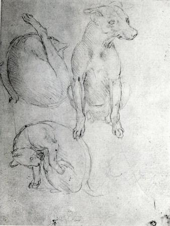 https://imgc.artprintimages.com/img/print/study-of-a-dog-and-a-cat-c-1480_u-l-p95yfv0.jpg?p=0