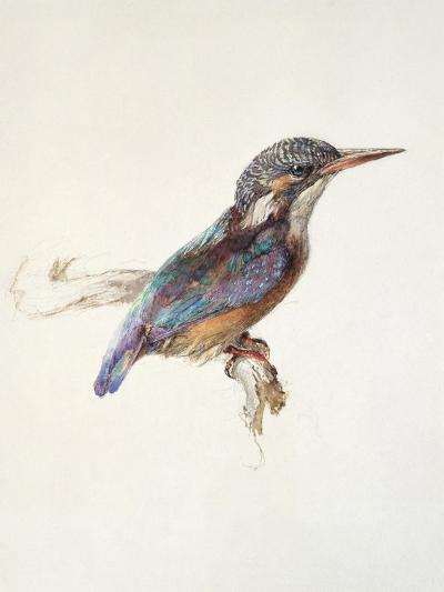 Study of a Kingfisher, with Dominant Reference to Colour, Probably October 1871-John Ruskin-Giclee Print