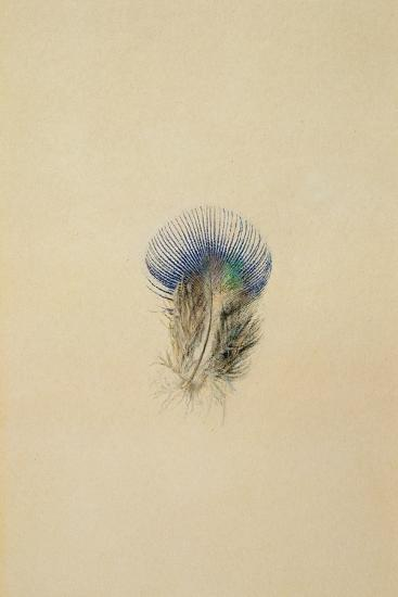 Study of a Peacock Feather, 1873-John Ruskin-Giclee Print