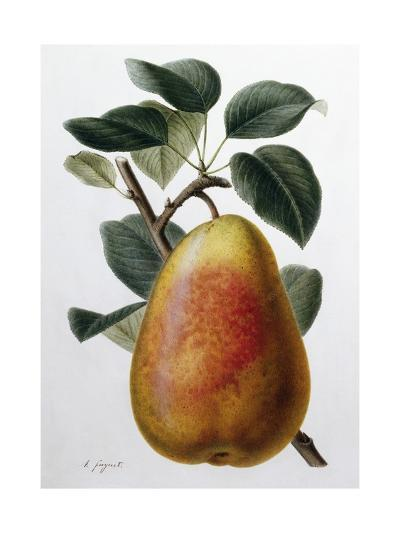 Study of a Pear-Adrienne Faguet-Giclee Print
