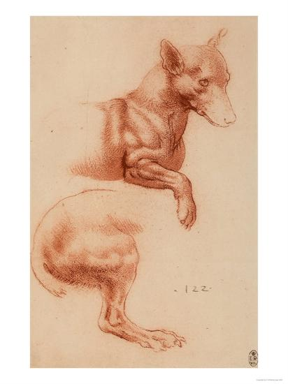 Study of a Pomeranian Dog, Drawing, Royal Library, Windsor-Leonardo da Vinci-Giclee Print