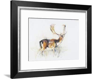 Study of a Stag-Mark Adlington-Framed Giclee Print