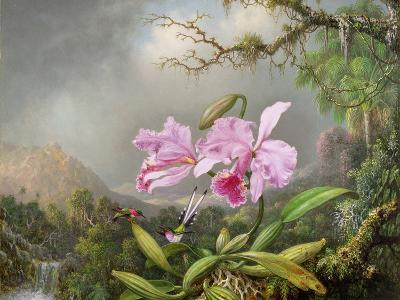 Study of an Orchid, 1872-Martin Johnson Heade-Giclee Print