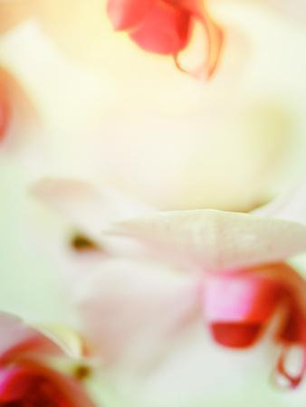 https://imgc.artprintimages.com/img/print/study-of-an-orchid_u-l-pyznb10.jpg?p=0