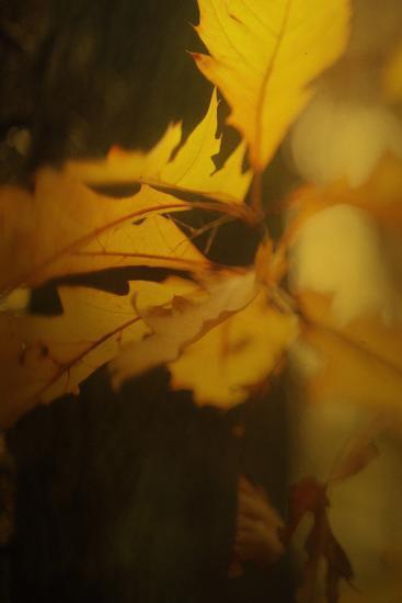 Study of Autumn Leaves VI-Mia Friedrich-Photographic Print