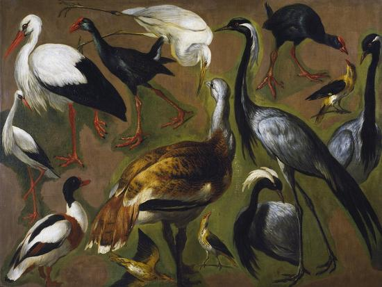 Study of Birds, by Alexandre-Francois Desportes (1661-1743), France, 18th Century-Alexandre-Francois Desportes-Giclee Print