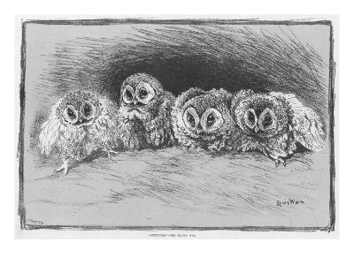 Study of Brown Owls by Louis Wain--Giclee Print