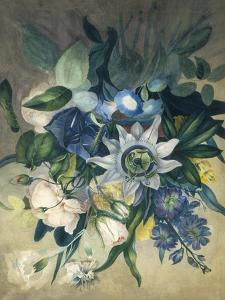 Study of Convulvulus, Passion Flower and Rose, c.1840