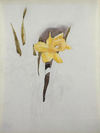 Study of Daffodils-George Wesley Bellows-Giclee Print