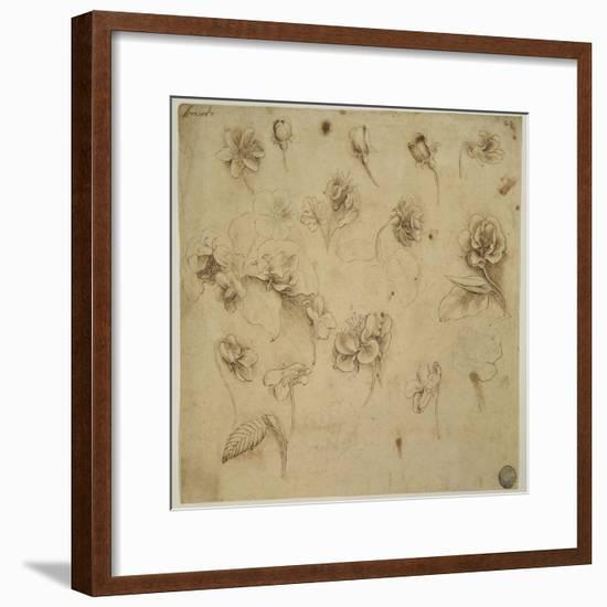 Study of Flowers-Leonardo da Vinci-Framed Giclee Print