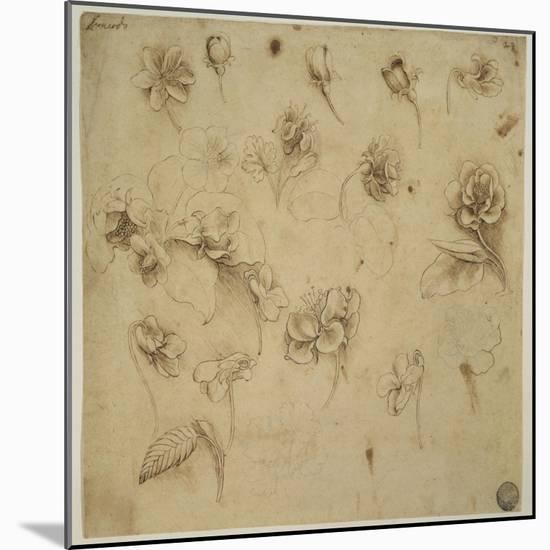 Study of Flowers-Leonardo da Vinci-Mounted Giclee Print