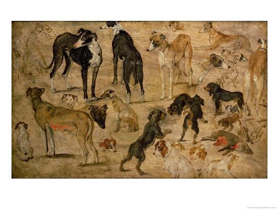 Study of Hounds, 1616-Jan Brueghel the Elder-Giclee Print