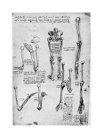 Study of Human Bones, Late 15th or 16th Century-Leonardo da Vinci-Giclee Print