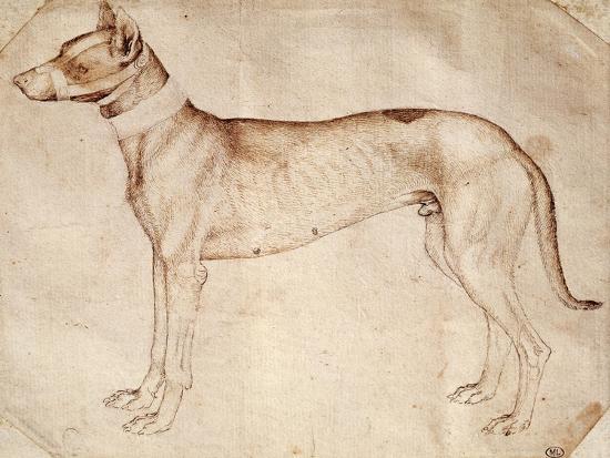 Study of Hunt Dog-Antonio Pisano-Giclee Print