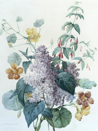 Study of Lilac, Capucine and Fuchsia-Pierre-Joseph Redout?-Giclee Print