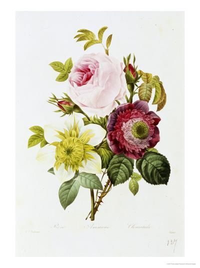Study of Pink Roses and Convulvulus-Pierre-Joseph Redout?-Giclee Print