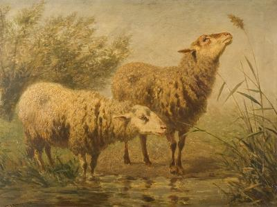 Study of Sheep-Edouard Woutermaertens-Giclee Print