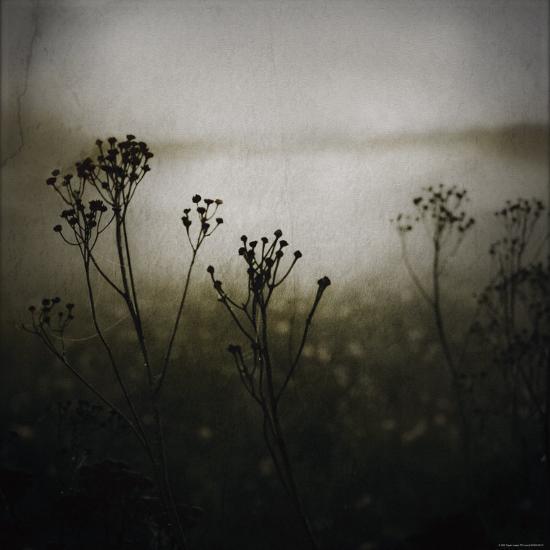 Study of Stems-Ewa Zauscinska-Photographic Print