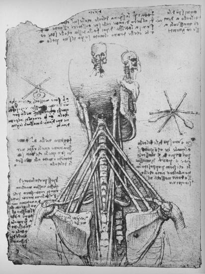 'Study of the Back View of a Skeleton, Showing the Tendons of the Neck', c1480 (1945)-Leonardo da Vinci-Giclee Print