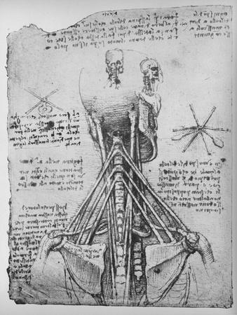 https://imgc.artprintimages.com/img/print/study-of-the-back-view-of-a-skeleton-showing-the-tendons-of-the-neck-c1480-1945_u-l-q1eljma0.jpg?p=0
