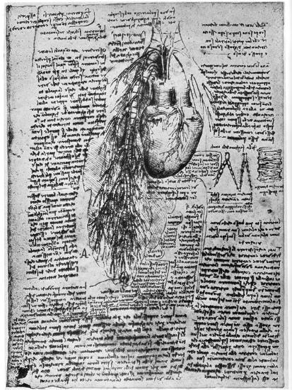 Study of the Heart and the Bronchial Arteries, Late 15th or Early 16th Century-Leonardo da Vinci-Premium Giclee Print