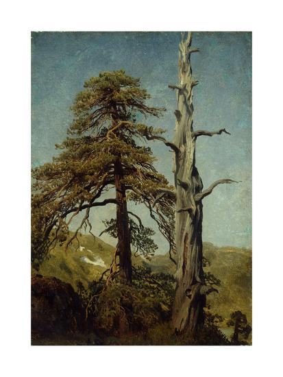 Study of Trees-August Cappelen-Giclee Print