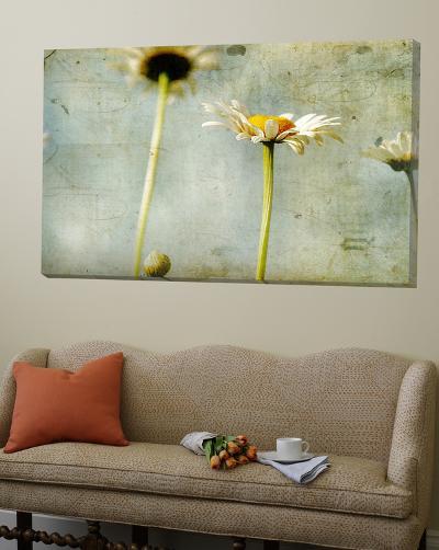 Study of White Daisies-Mia Friedrich-Loft Art