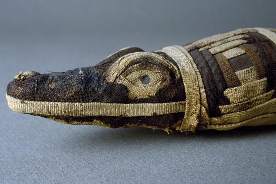 Stuffed Crocodile, Dating from Roman Period AD, Detail--Giclee Print