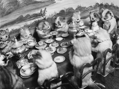 Stuffed Kittens Lunch--Photographic Print
