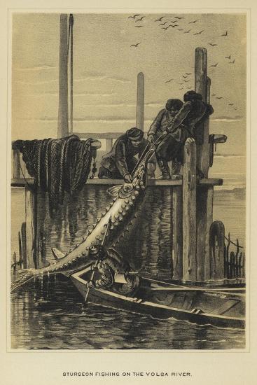 Sturgeon Fishing on the Volga River--Giclee Print
