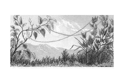 Stylized Beaded Ribbon Connecting Leafy Stems--Art Print