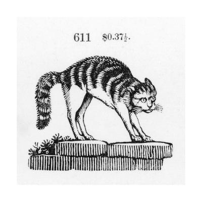 Stylized Cat with Arched Back on Stones--Art Print