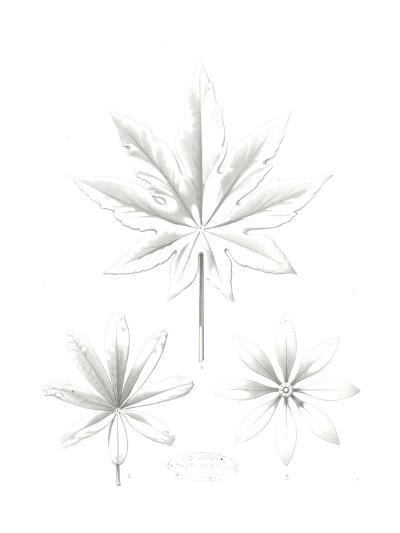 Stylized Flower and Leaf Line Drawings--Art Print