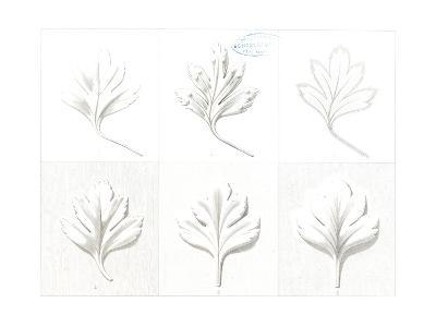 Stylized, Leafy Variations Diagram--Art Print