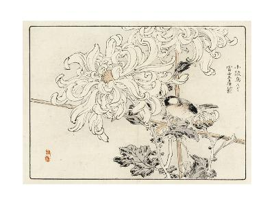 Stylized White Chrysanthemum with Perched Bird--Art Print