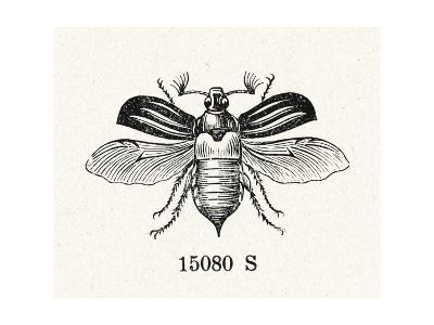 Stylized Winged Insect Illustration--Art Print
