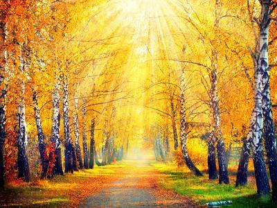 Autumn. Fall. Autumnal Park. Autumn Trees and Leaves in Sun Rays. Beautiful Autumn Scene