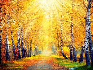 Autumn. Fall. Autumnal Park. Autumn Trees and Leaves in Sun Rays. Beautiful Autumn Scene by Subbotina Anna