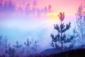 Beautiful Nature Sunrise Foggy Landscape. Misty Forest. Spring Nature. Park with Trees. Tranquil Ba by Subbotina Anna