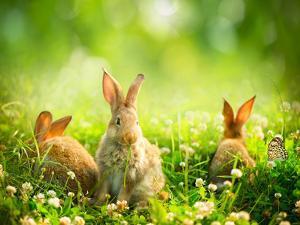 Rabbits by Subbotina Anna