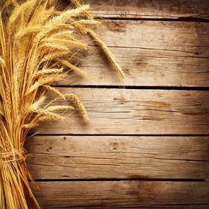 Wheat Ears on the Wooden Table, Sheaf of Wheat over Wood Background by Subbotina Anna