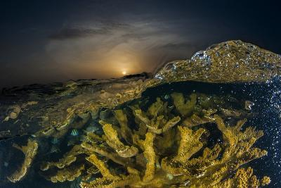 Submerged Endangered Elkhorn Coral in Garden of the Queen National Marine Park-David Doubilet-Photographic Print