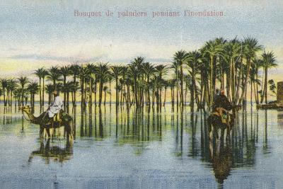 Submerged Palm Trees During the Nile Floods, Egypt--Photographic Print