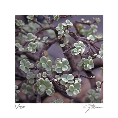 Succulent 13-Ken Bremer-Limited Edition