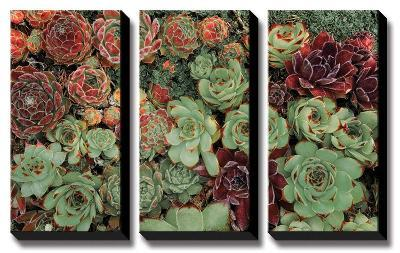 Succulent Collection-Dennis Frates-Canvas Art Set
