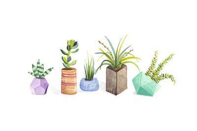 https://imgc.artprintimages.com/img/print/succulent-display-i_u-l-q1302390.jpg?p=0