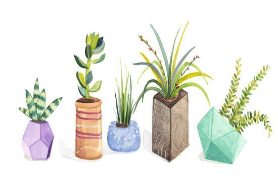Succulent Display I-Rebekah Ewer-Art Print