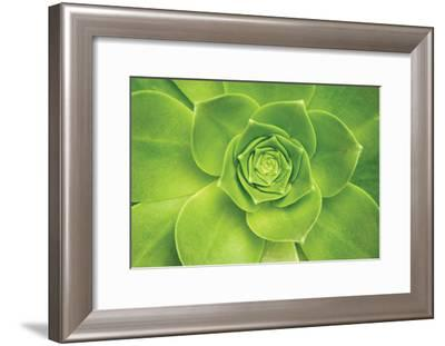 Succulent II-Karyn Millet-Framed Photographic Print
