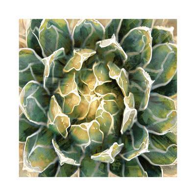 https://imgc.artprintimages.com/img/print/succulent-iii_u-l-f8vet70.jpg?p=0